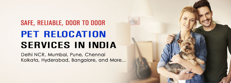 pet-relocation-transport-services-in-india