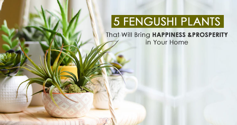 fengshui-plants